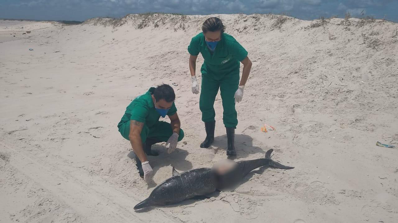 Pescador é suspeito de tentar esquartejar boto-cinza em Maceió - Noticias