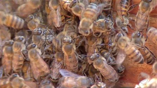 Produção de mel cresce no leste de MS após capacitação de apicultores