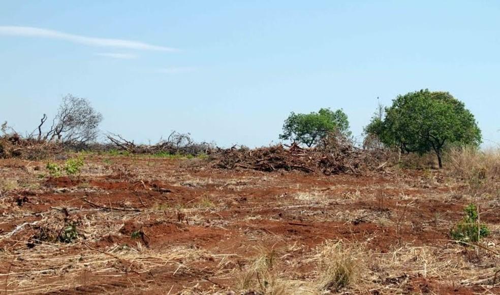 Desmatamento é monitorado por satélite pelo Inpe (Foto: Divulgação)