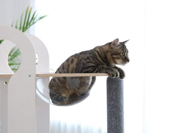 A cúpula transparente serve para os gatos se pendurarem e descansarem (Foto: Mia Cara/ Reprodução)