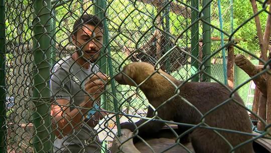 Projeto faz a preservação e reprodução de lontras neotropicais em Florianópolis