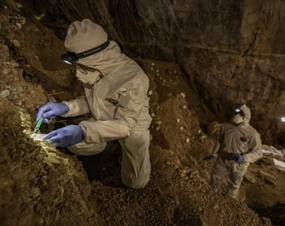 DNA de urso em fezes deixadas em caverna há 16 mil anos é sequenciado