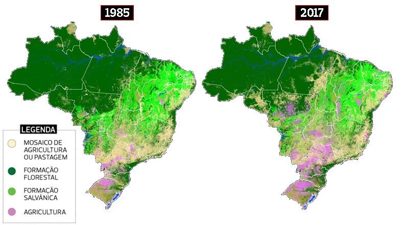 brasil-vegetação-mapbiomas-bioma-mapa (Foto: MapBiomas/Globo Rural)