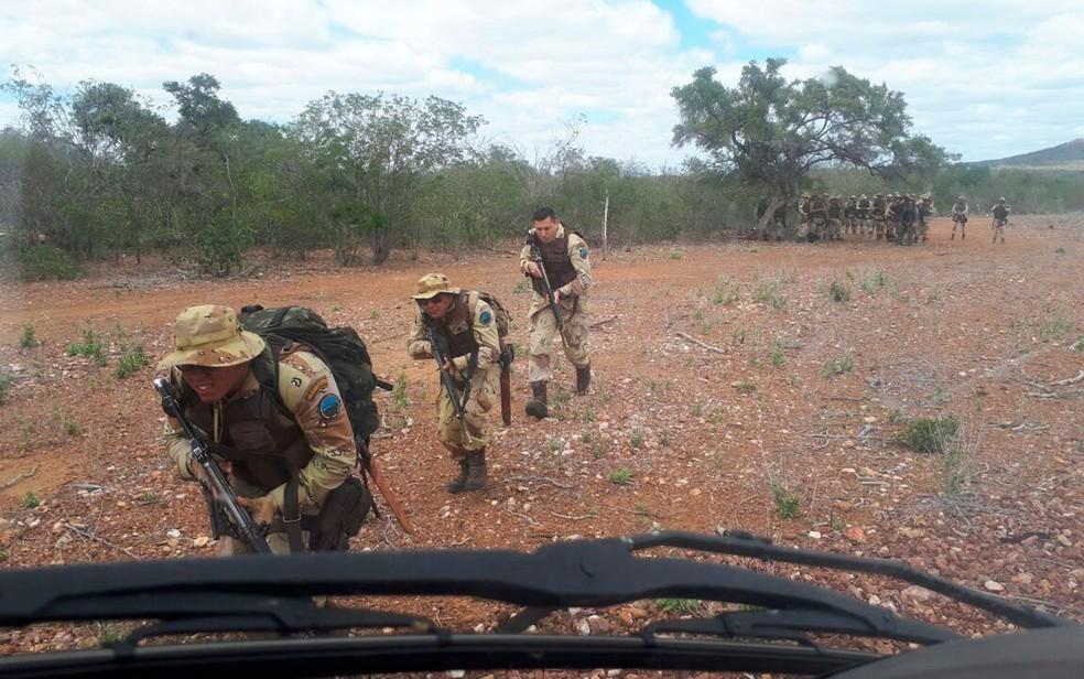Plantação com cerca de 200 mil pés de maconha foi apreendida pela polícia no norte da Bahia (Foto: Divulgação/SSP)