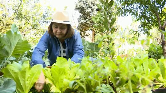 Hortas urbanas garantem alimentos saudáveis e reduzem o estresse