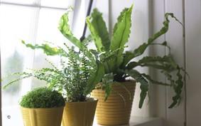 10 plantas que precisam de poucos cuidados