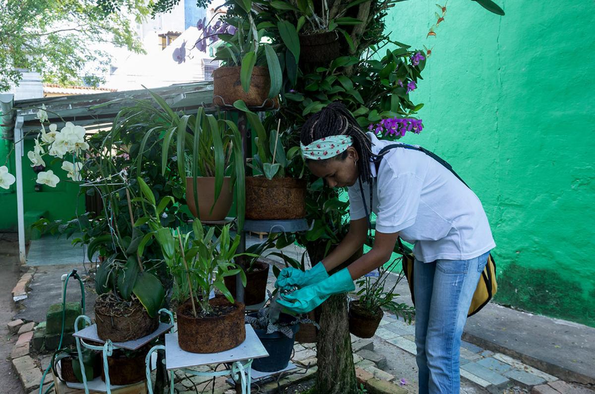 Macaé, RJ, reforça ações de combate ao mosquito Aedes aegypti
