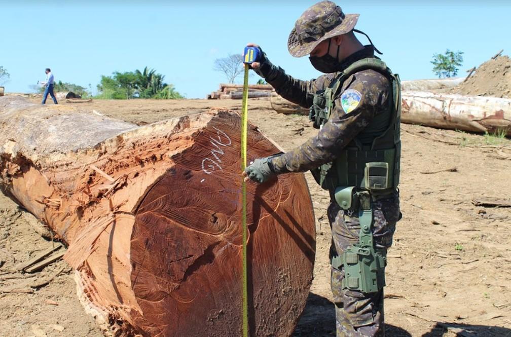 Fiscalizações foram feitas em madeireiras durante Operação Verde Brasil 2. — Foto: Diêgo Holanda/G1