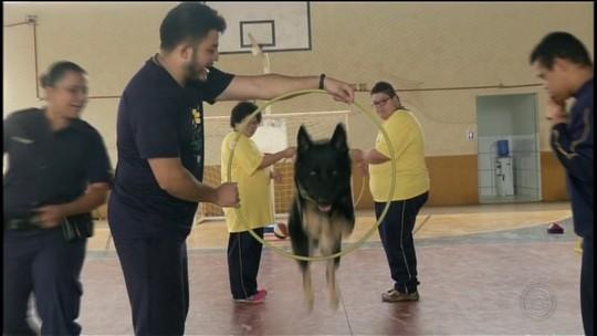 Terapia com cães ajuda crianças em projeto social no interior de SP