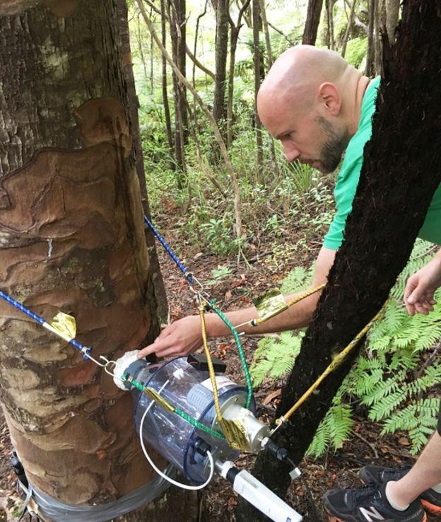 Martin Bader (foto) e Lutzinger mediram o fluxo de água dos kauris vizinhos para o toco (Foto: SEBASTIAN LEUZINGER/BBC)