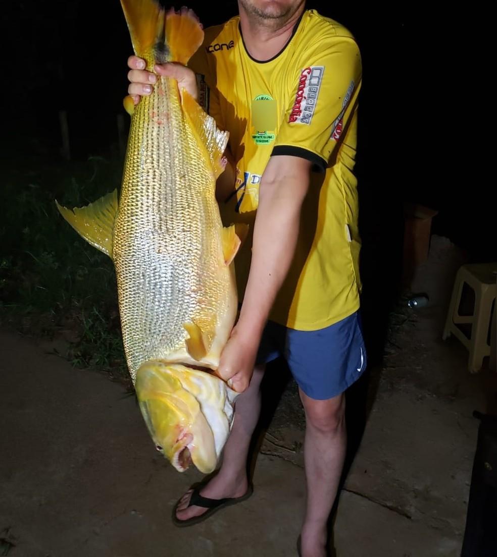Empresário exibe dourado, fisgado em pesca ilegal em MS.  Foto: PMA/Divulgação