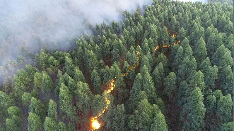 Incêndio atinge área de mata em Vinhedo; bombeiros trabalham no combate por 24h