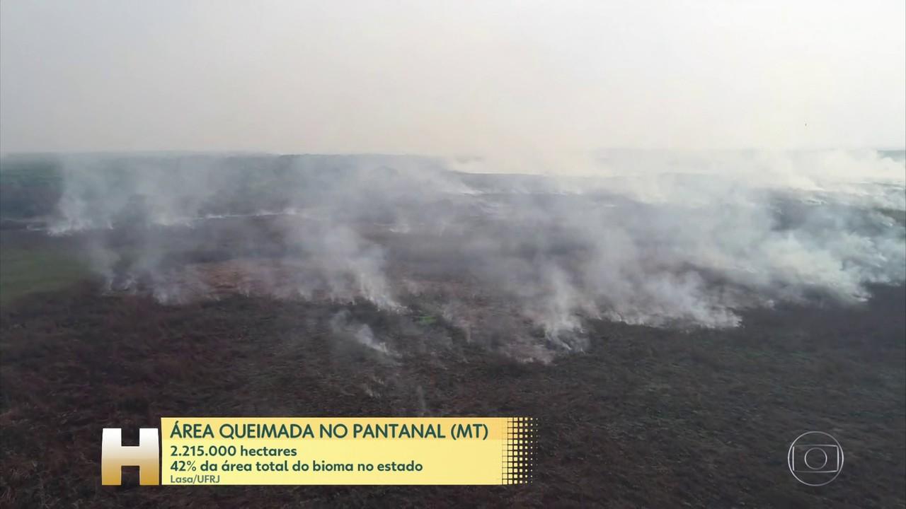 Bombeiros dizem que o fogo está controlado no Pantanal de MT