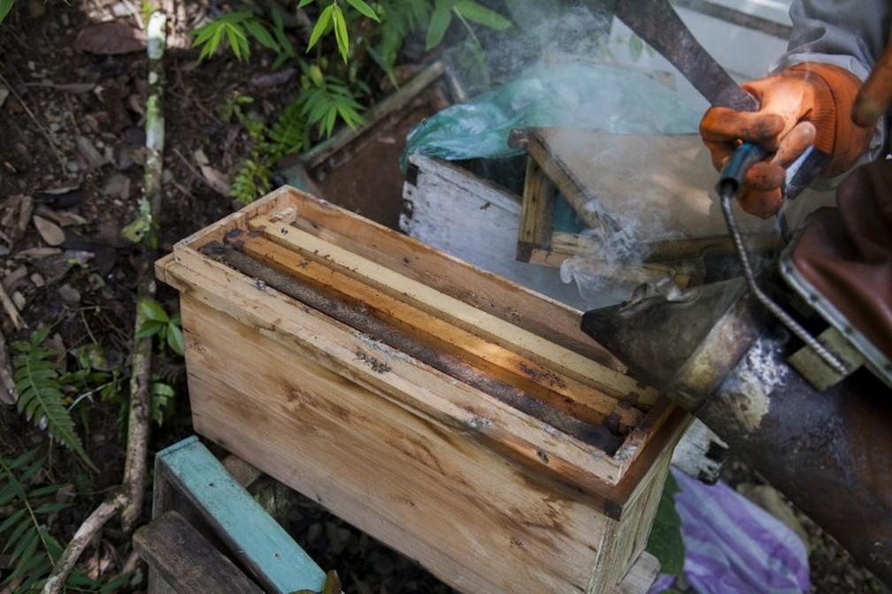 Nancy Carlo Estrada, que trabalha em plantação de coca, mostra impacto nas abelhas — Foto: William Wroblewski/AFP