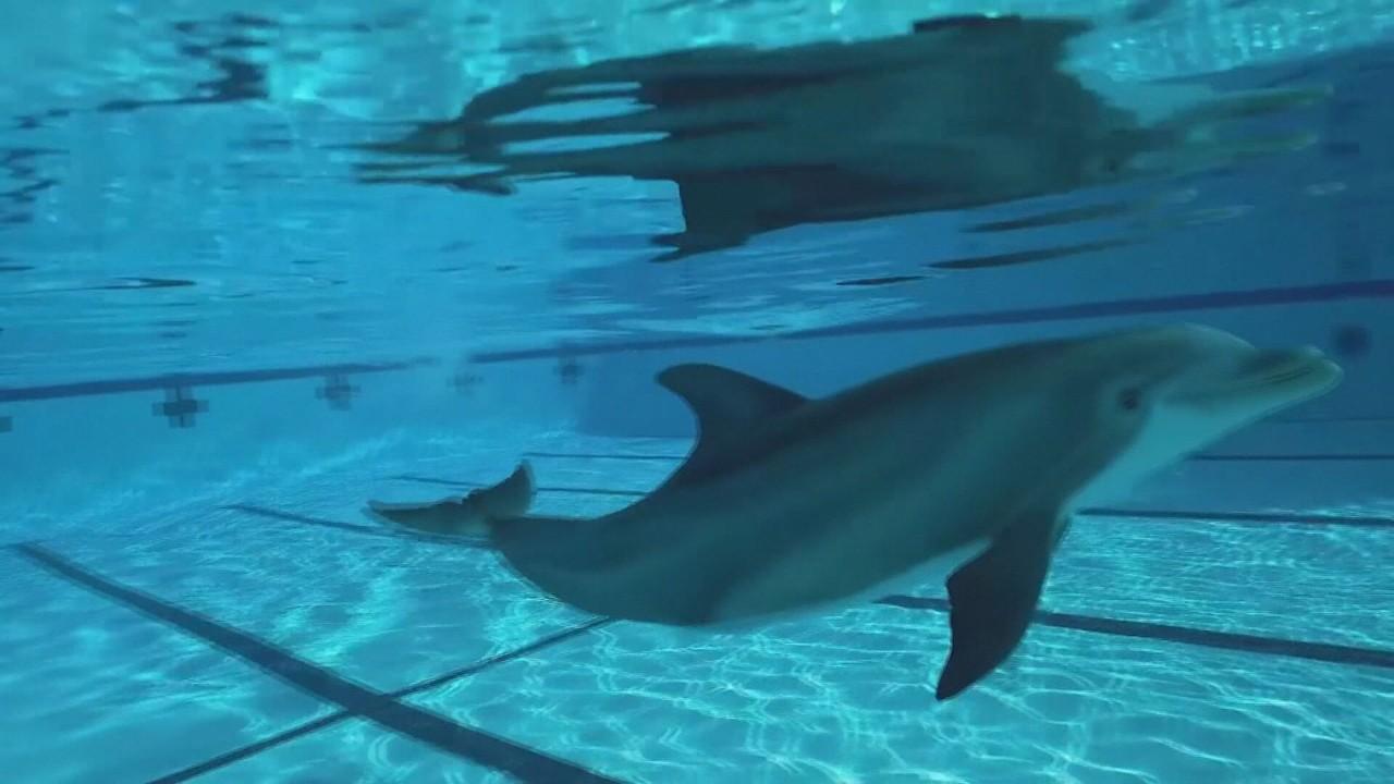 Projeto de educação ambiental usa golfinhos robôs