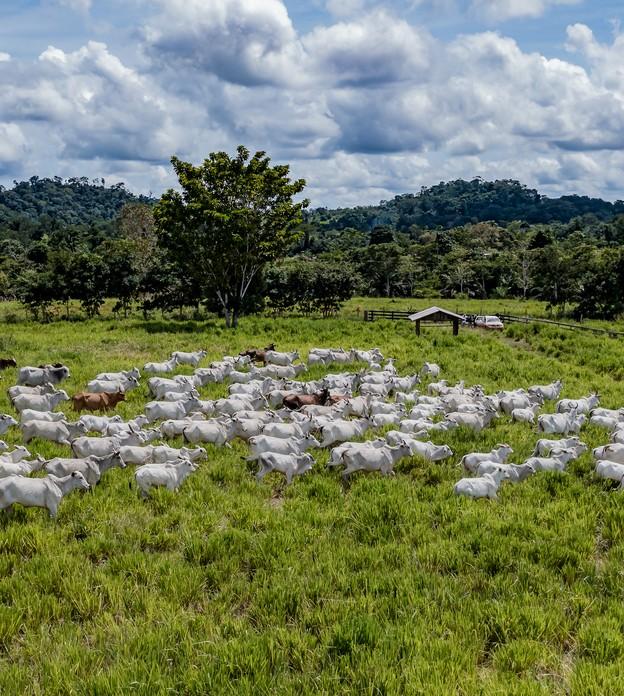 Carne bovina rastreável e livre de desmatamento chega aos supermercados