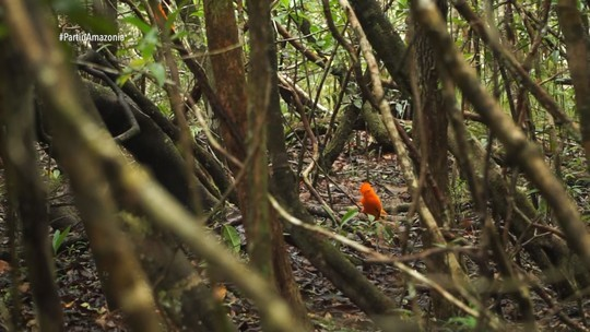 'Partiu Amazônia' visita Presidente Figueiredo
