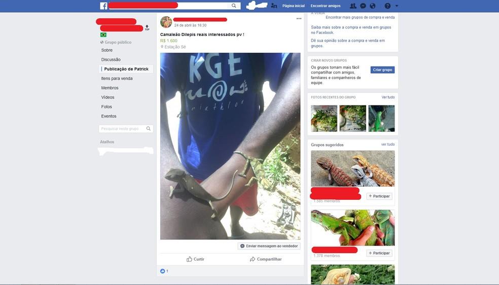 Entre os animais anunciados estão lagartos, cobras e camaleões (Foto: Polícia Federal/Divulgação)