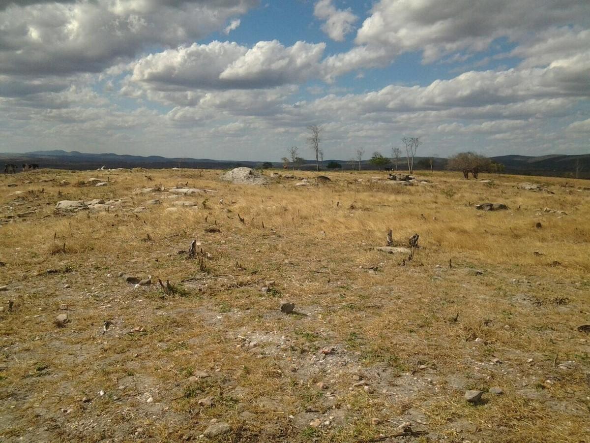 Operação flagra áreas degradadas de 76 hectares em Traipu, AL