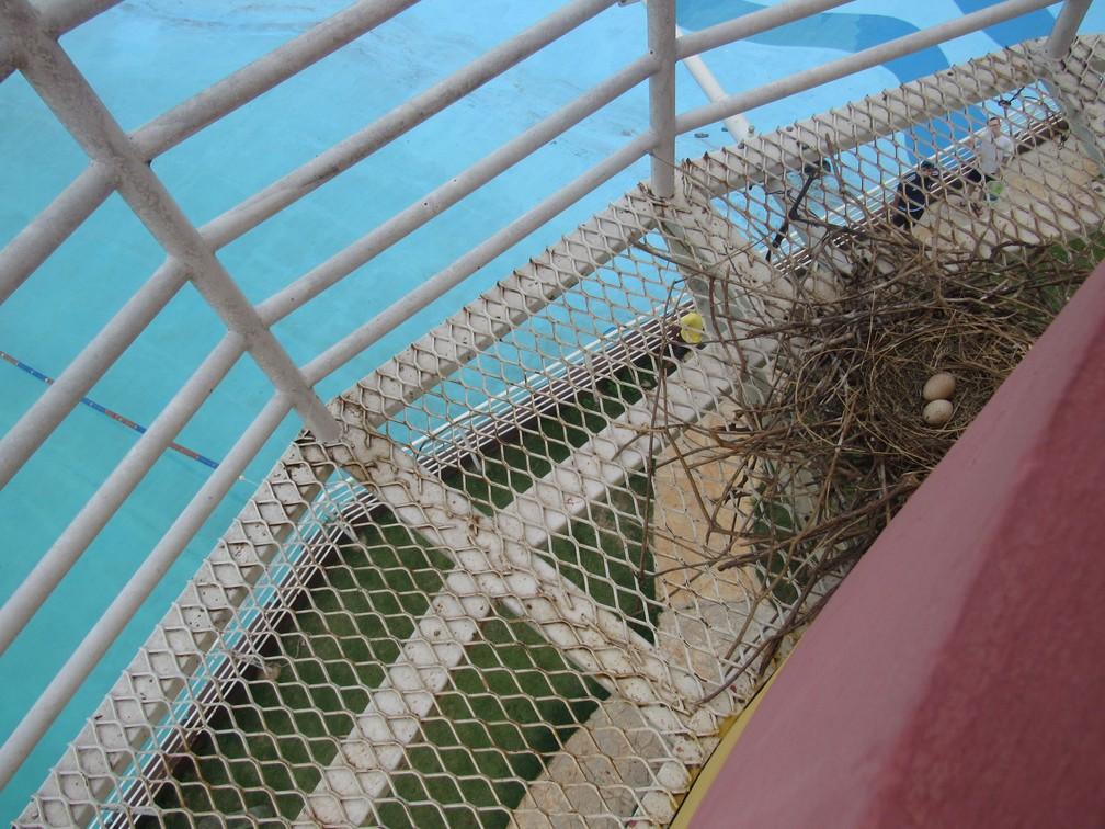 Curicacas construíram ninho no farol da Cidade da Criança (Foto: AI/Cidade da Criança)