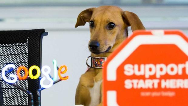 Cachorrinha Soja, pet de um casal de funcionários do Google Brasil (Foto: Divulgação)