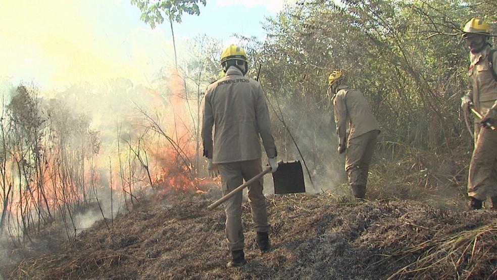 Acre registrou mais de 790 focos de calor de 1 a 11 de agosto deste ano, segundo Inpe (Foto: Reprodução/Rede Amazônica Acre )