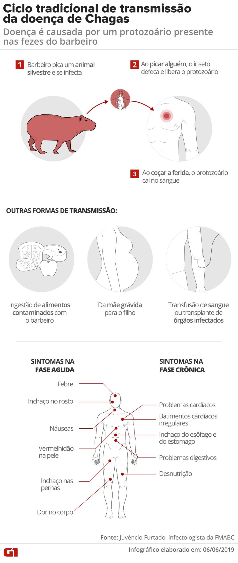 Entenda como a doença de Chagas pode ser transmitida — Foto: Diana Yukari e Juliane Monteiro/G1