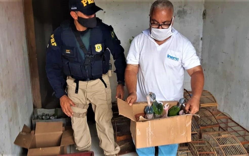 Animais silvestres serão tratados antes de serem devolvidos à natureza — Foto: Divulgação/PRF