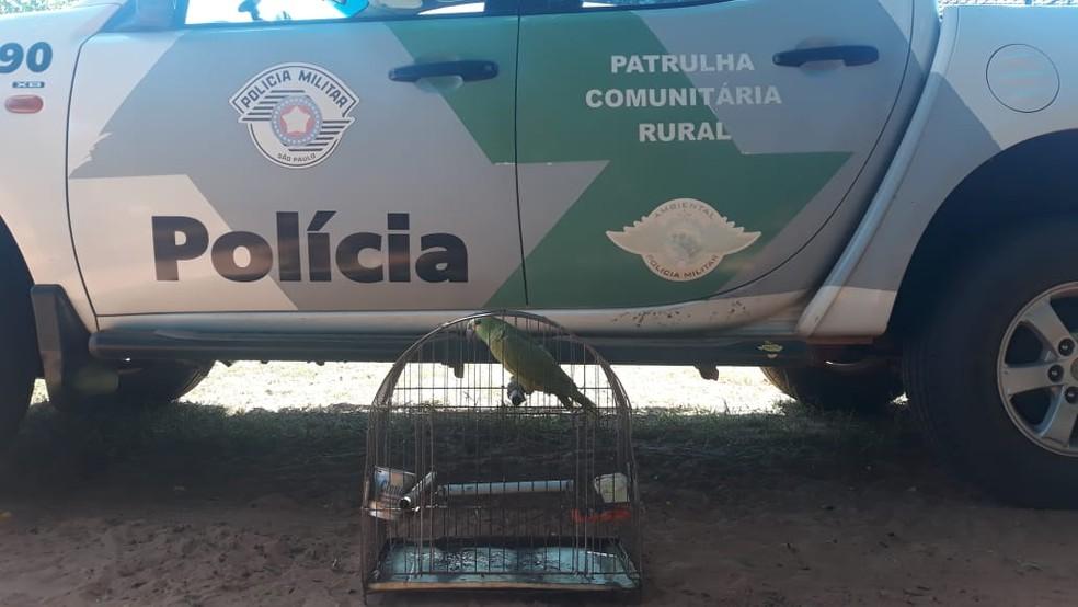 Papagaio estava em um sítio em Caiuá — Foto: Polícia Ambiental