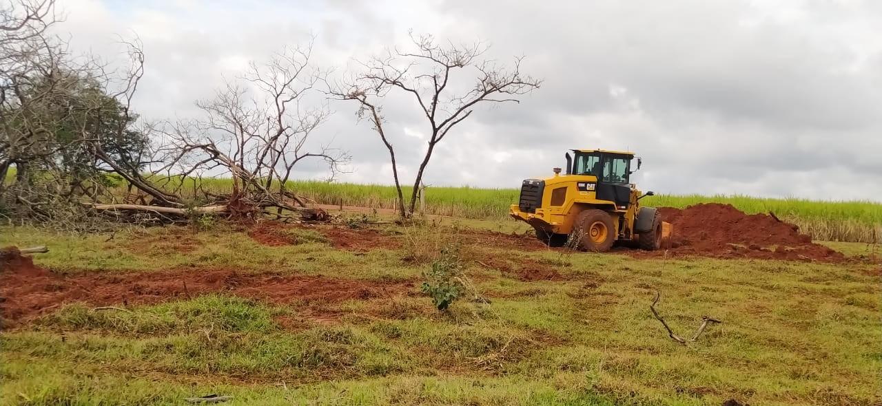 Empresa de terraplanagem é multada em R$ 14,7 mil pela derrubada de 49 árvores nativas em Iepê