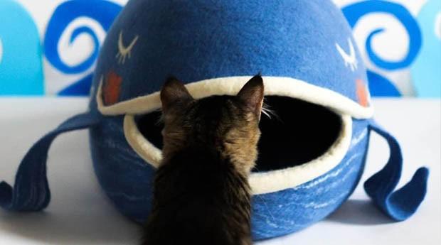 gato; casa; (Foto: Divulgação)