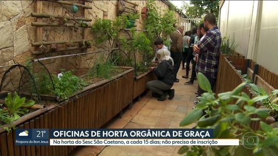 Mutirão Verde ensina como cuidar de hortas