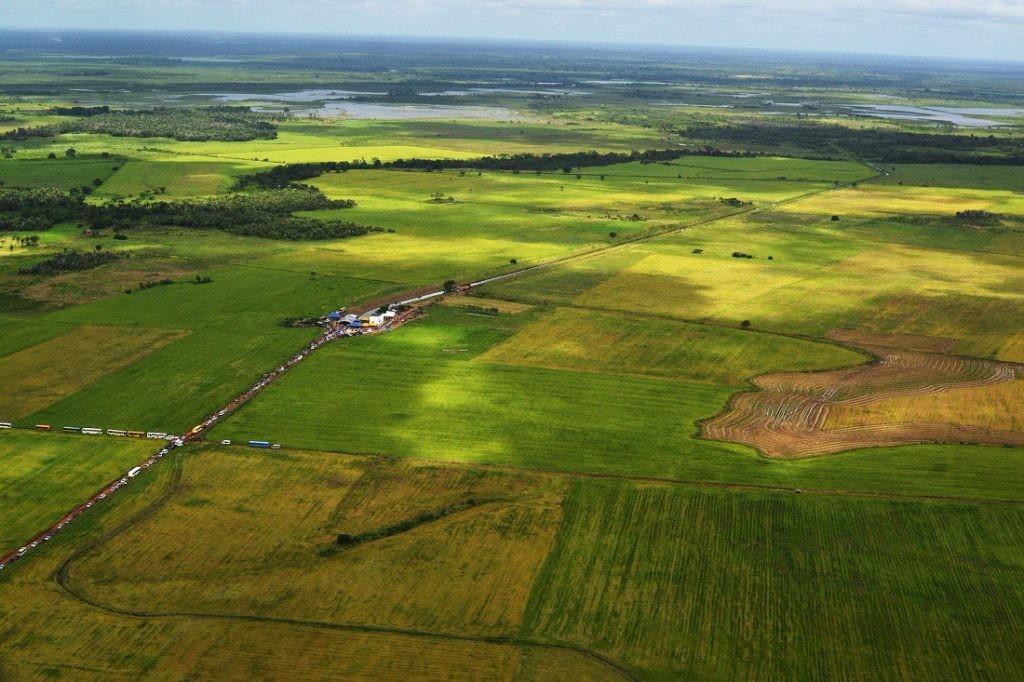 Maranhão se destaca na produção agrícola de arroz