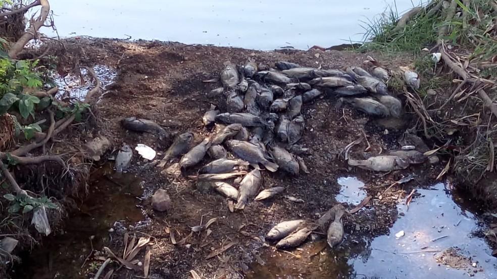 Desde sexta-feira (31) moradores encontram os peixes mortos — Foto: Guilherme Ribeiro/Arquivo Pessoal