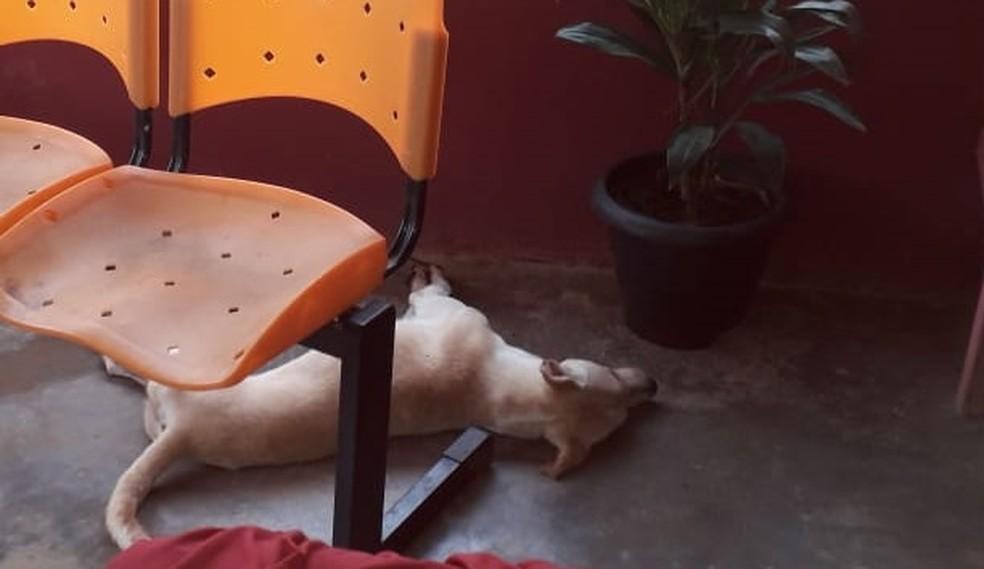 Cão é o 25º animal morto supostamente por envenenamento em MT — Foto: TVCA/Reprodução