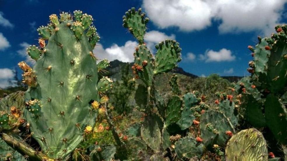 Os cactos acrescentam cor à paisagem árida da ilha — Foto: Getty Images/Via BBC