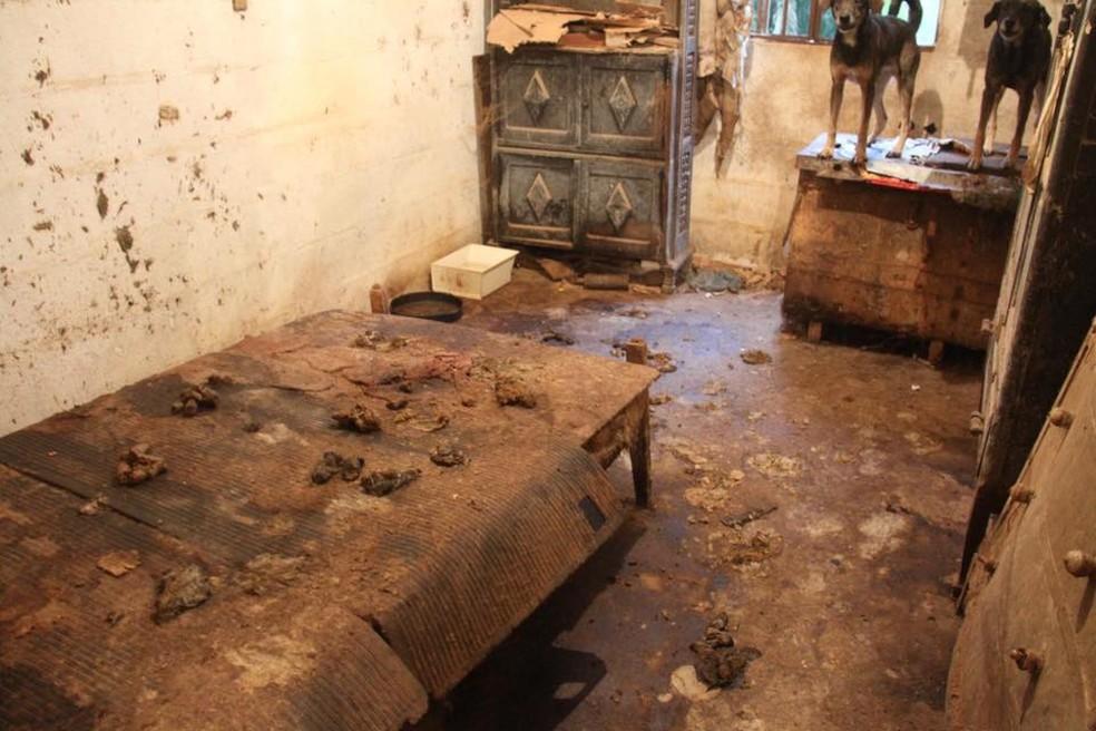 Animais são localizados abandonados em propriedade em Jacupiranga, SP (Foto: Divulgação/GPA)