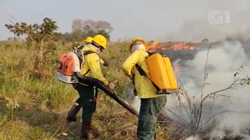 Brigadistas combatem incêndio no Pantanal de MS — Foto: Ibama/Prevfogo/Divulgação