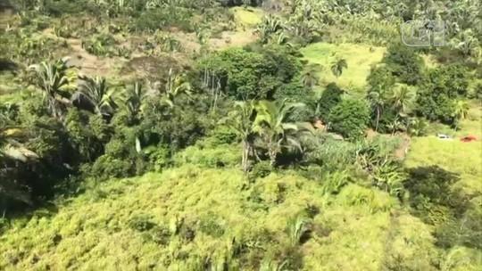 Fazenda onde plantação de 10 mil pés de maconha foi encontrada pode ir para reforma agrária