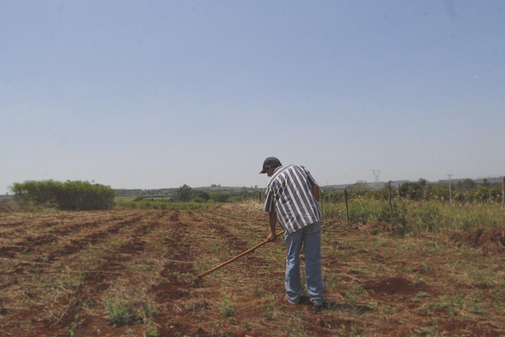 Agricultor trabalha no lote no assentamento Bela Vista — Foto: Fabio Rodrigues/G1