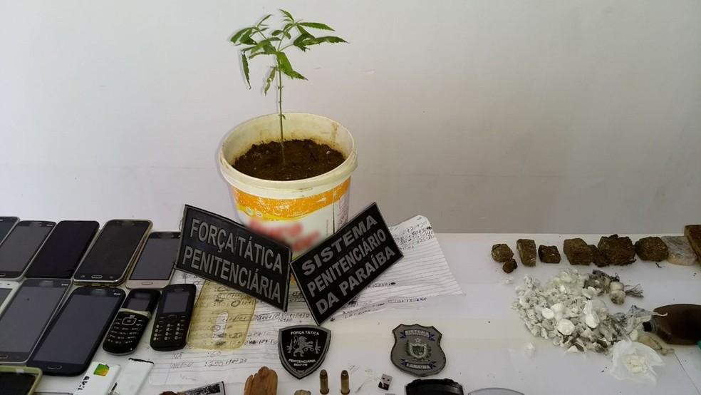 Muda de planta semelhante a maconha estava dentro de Colônia Agrícola de Sousa, na PB (Foto: Edson Avelino / Diretor da Penitenciária)