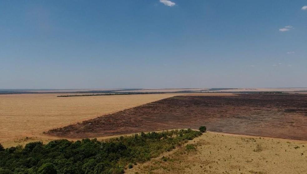 Área de fazenda foi devastada pelo fogo em MT — Foto: Corpo de Bombeiros