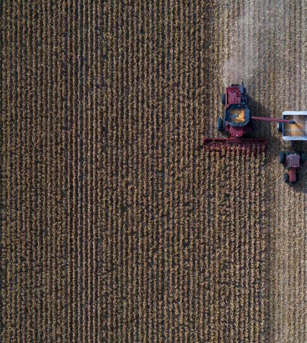 Safras de milho e soja dos EUA pioraram inesperadamente, afirma USDA
