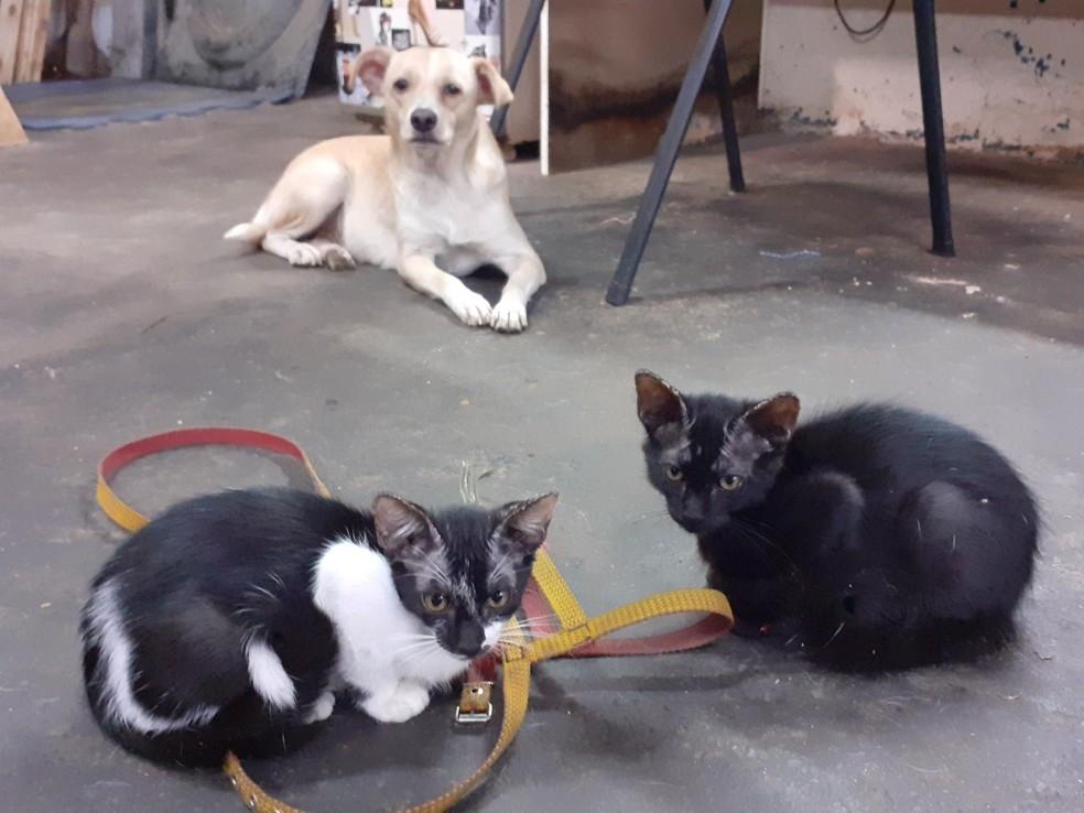 Agusta convive com oito gatos em oficina de Catanduva  — Foto: Arquivo pessoal/Jeferson Rodrigues