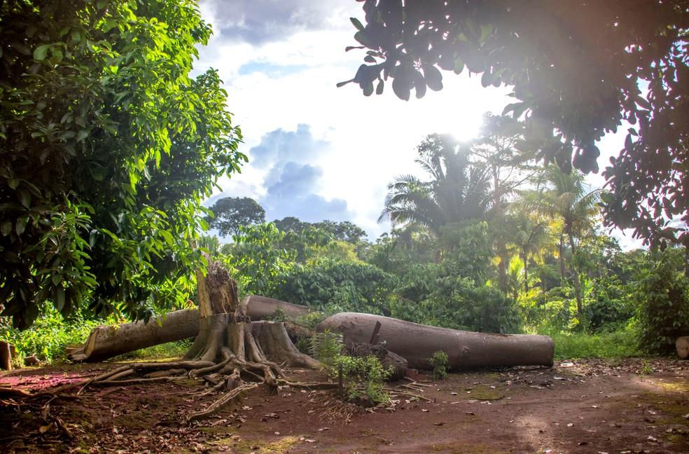 Reserva Extrativista Aquariquara em Rondônia — Foto: Sedam/Divulgação