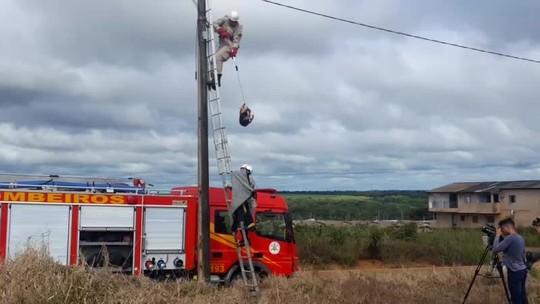 Tamanduá sobe no topo de poste e 'dá trabalho' para os bombeiros em MT; veja o vídeo