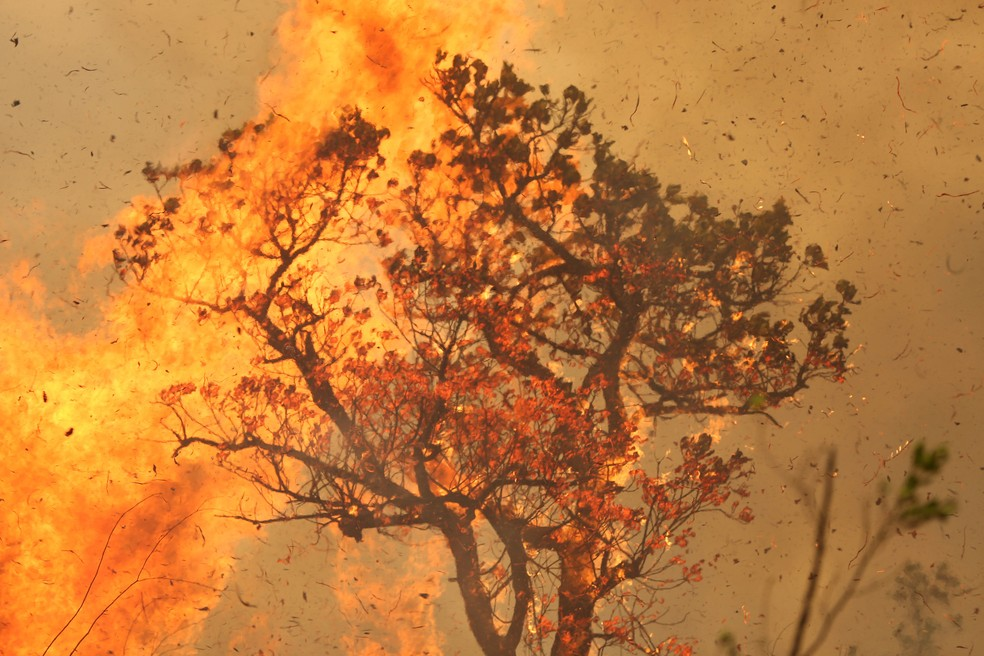 15 de setembro - Parte de uma árvore na Floresta Amazônica é vista em chamas no território indígena de Tenharim Marmelos, na Amazônia. Segundo dados do Inpe, quase 20 mil focos de queimadas foram registrados na Amazônia em setembro. No acumulado do ano foram registrados quase 88 mil focos de queimadas, um aumento de 28% em relação ao mesmo período de 2018 — Foto: Bruno Kelly/Reuters/Arquivo