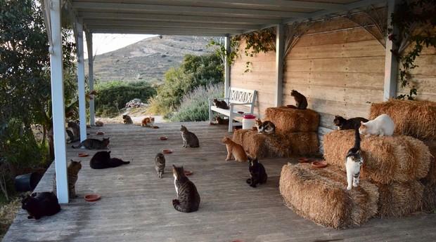Ilha de Syros, local onde fica abrigo mais de 50 gatos  (Foto: Reprodução)