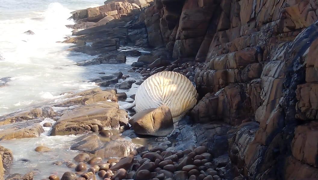 Baleia de 10 metros de comprimento é encontrada morta em rochedo no litoral de SP  - Notícias - Plantão Diário