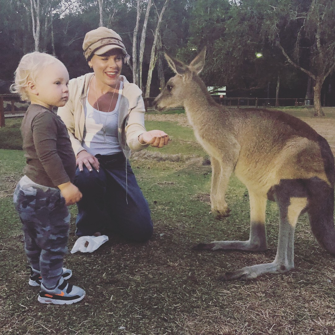 Pink, Jameson e o canguru (Foto: Reprodução / Instagram)